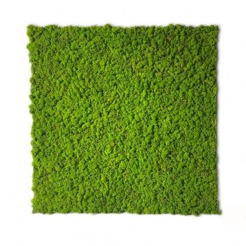 Moss lichene naturale stabilizzato